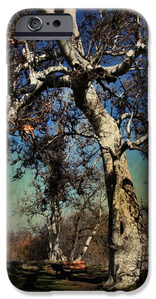 Tree. Sycamore iPhone Cases - A Day Like This iPhone Case by Laurie Search