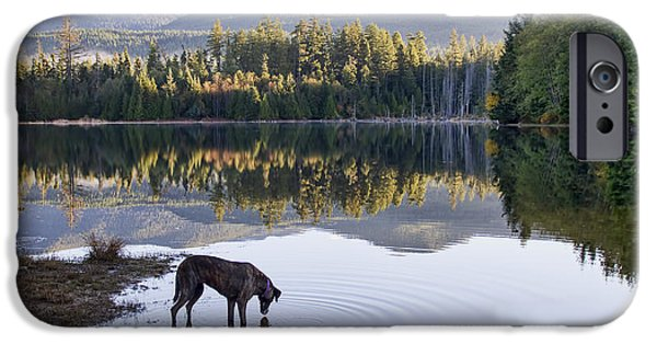 Rescued Greyhound iPhone Cases - A Dog at the Lake iPhone Case by Peggy Collins