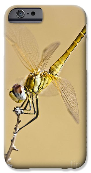 Biologic iPhone Cases - A Dragon Flies iPhone Case by Heiko Koehrer-Wagner