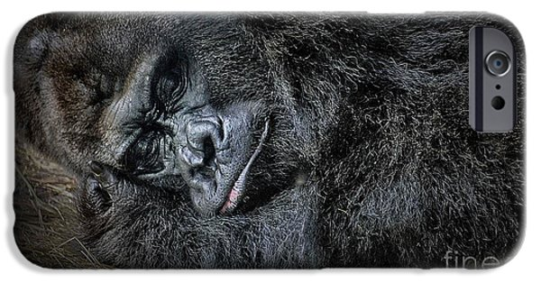 Animals Photographs iPhone Cases - A Face Only A Mother Can Love iPhone Case by Arnie Goldstein