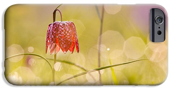 Meleagris iPhone Cases - A Fairies Place II _Snakes head fritillary iPhone Case by Roeselien Raimond
