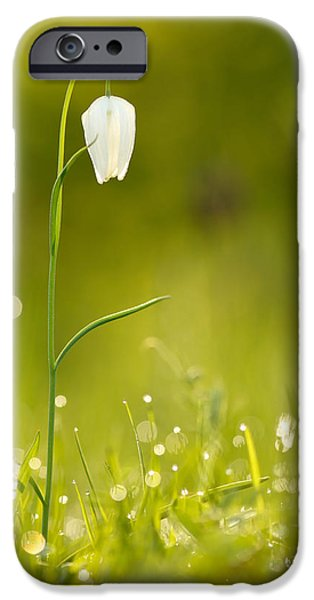 Bokeh iPhone Cases - A Fairies Place III _Snakes head fritillary iPhone Case by Roeselien Raimond