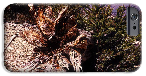 Tree Roots iPhone Cases - A Fallen Ancient iPhone Case by Paul W Faust -  Impressions of Light