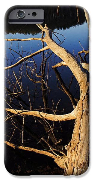 Winter iPhone Cases - A fallen tree beside a lake at sunset iPhone Case by Edward Fielding