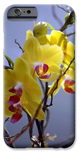 Cora Wandel iPhone Cases - A Family Of Orchids iPhone Case by Cora Wandel
