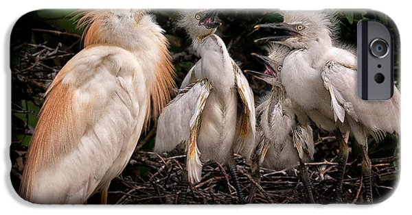 Cattle Egret iPhone Cases - A Family Portrait iPhone Case by Rick Barnard