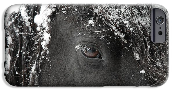 Print Photographs iPhone Cases - A few of my favorite things iPhone Case by Fran J Scott