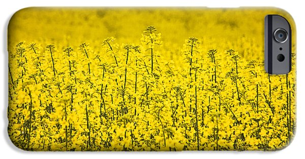 Agricultural iPhone Cases - A Field of Canola  iPhone Case by Priscilla Burgers