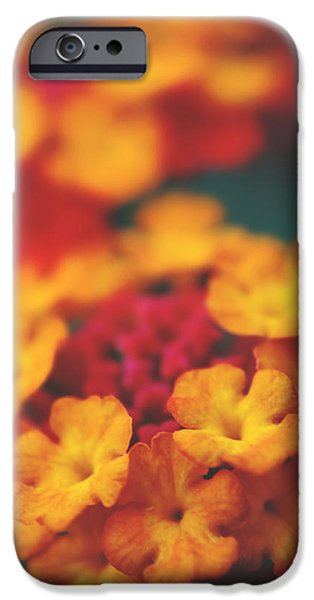 Macro Flower iPhone Cases - A Fiery Love iPhone Case by Laurie Search
