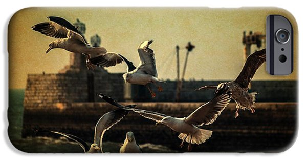 Flying Seagull iPhone Cases - A Flock of Seagulls iPhone Case by Marco Oliveira