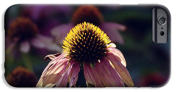 Flower iPhone Cases - A flower in its final iPhone Case by Gloria Pasko