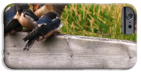 Best Sellers -  - Barn Swallow iPhone Cases - A Fourth Baby Barn Swallow Wants in on Lunch iPhone Case by J McCombie