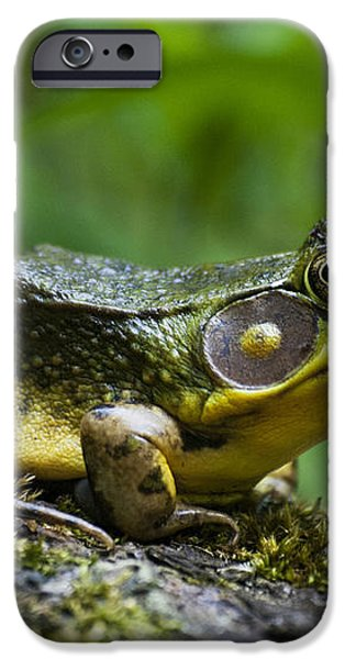 A Frog Is Forever iPhone Case by Christina Rollo