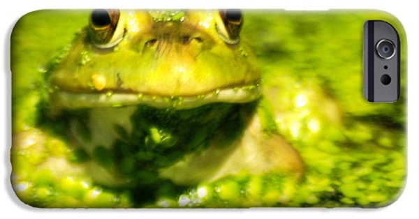 Invertebrates Mixed Media iPhone Cases - A frogs day iPhone Case by Optical Playground By MP Ray