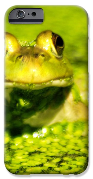 A frogs day iPhone Case by Optical Playground By MP Ray