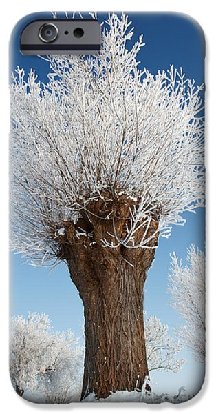 Willow Lake Photographs iPhone Cases - A frosted willow on a very cold and bright winter day iPhone Case by Roeselien Raimond