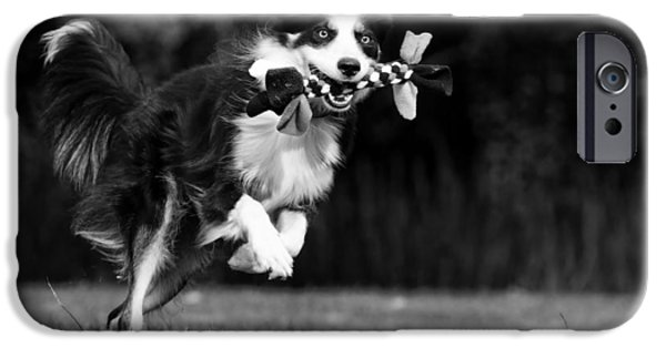 Dog And Toy iPhone Cases - A Game of Fetch iPhone Case by Katrin Kerou
