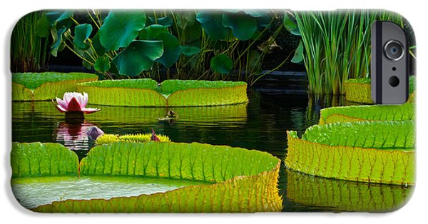 Victoria Cruziana iPhone Cases - A Garden In Gentle Waters iPhone Case by Byron Varvarigos