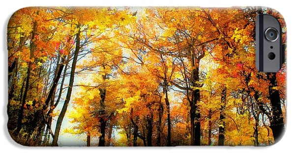 Autumn Trees iPhone Cases - A Golden Day iPhone Case by Lois Bryan