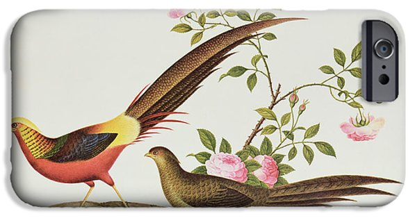 Pheasant iPhone Cases - A Golden Pheasant iPhone Case by Chinese School
