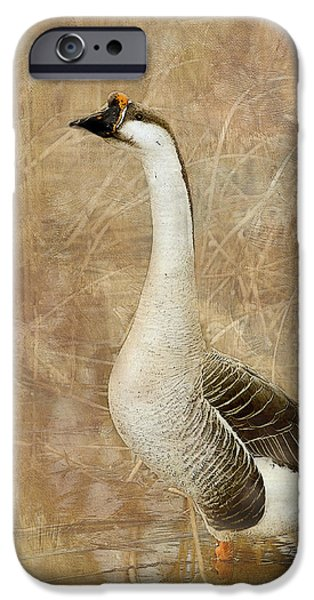 A Goose is a Goose iPhone Case by Betty LaRue