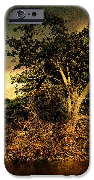 A Great Fallen Tree iPhone Case by Pamela Phelps