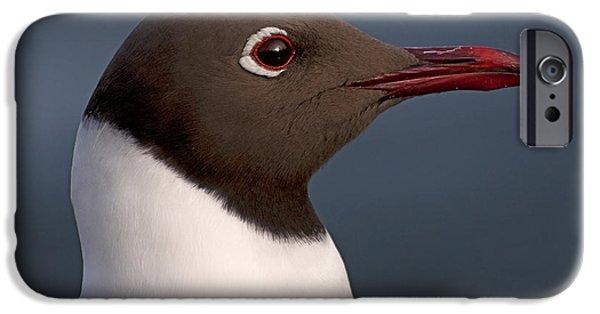 Norway iPhone Cases - A Gulls portrait.. iPhone Case by Nina Stavlund
