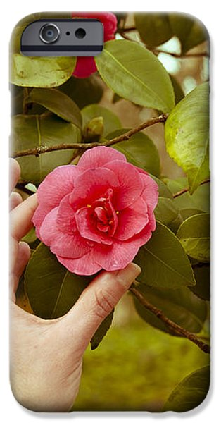A hand and a Camellia iPhone Case by Dr Mador