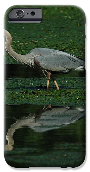 A Heron Hunting iPhone Case by Raymond Salani III