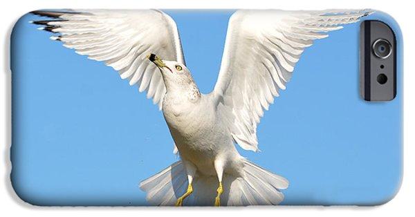 Seagull iPhone Cases - A Higher Gull iPhone Case by Fraida Gutovich