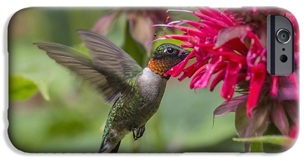 Archilochus Colubris iPhone Cases - A Hummingbird Hovers By A Bright Pink iPhone Case by Julie DeRoche