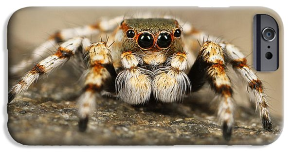 Jumping Spiders iPhone Cases - A Jumping Spider iPhone Case by Mountain Dreams