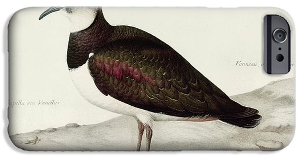 Feather Drawings iPhone Cases - A Lapwing iPhone Case by Nicolas Robert