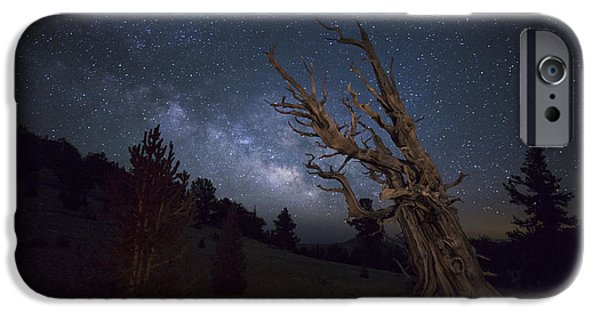 Patriarch iPhone Cases - A Large Bristlecone Pine iPhone Case by Dan Barr