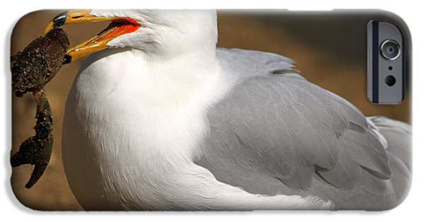 Seagull iPhone Cases - A Little Bit Crabby  iPhone Case by Donna Kennedy