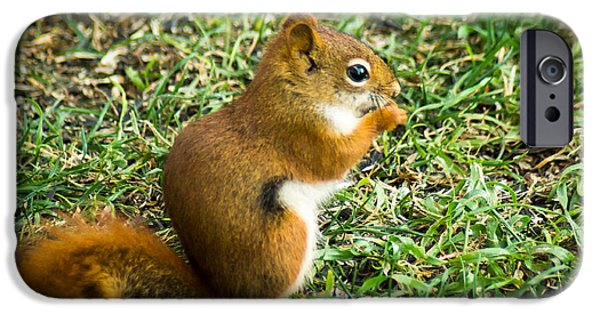 Bushy Tail iPhone Cases - A Little Squirrelly iPhone Case by Bill Pevlor
