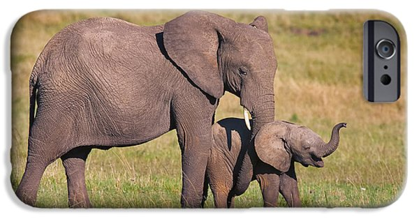 Elephants iPhone Cases - A Little Tickle iPhone Case by Mike Dodak