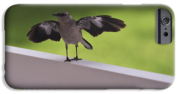 Mockingbird iPhone Cases - A little Visitor Northern Mockingbird iPhone Case by Terry DeLuco
