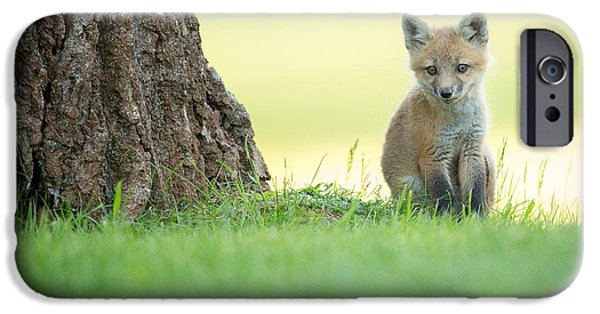 Fox Kit iPhone Cases - A lone kit iPhone Case by Everet Regal