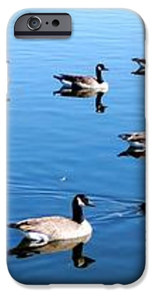 A lot of Geese iPhone Case by Eric w Martin