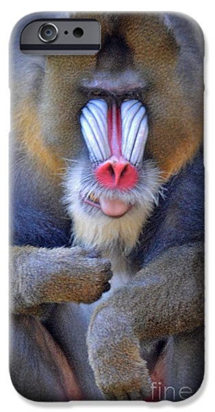 Four Animal Faces iPhone Cases - A Male Mandrill iPhone Case by Jim Fitzpatrick