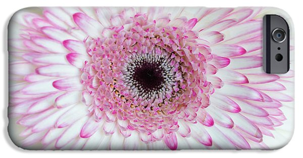 White Daisies iPhone Cases - A Million Petals iPhone Case by Ana V  Ramirez