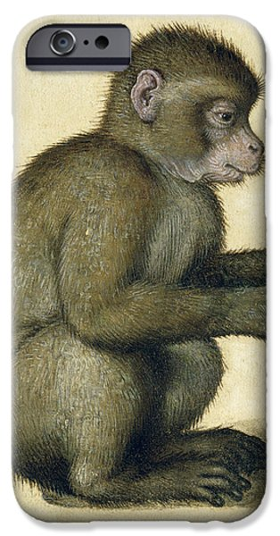 Young Paintings iPhone Cases - A Monkey iPhone Case by Albrecht Durer