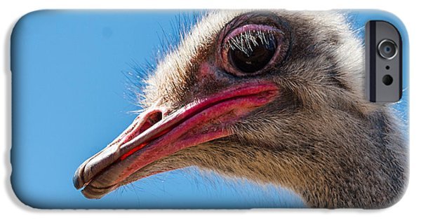 Ostrich iPhone Cases - A mug only a mother could love. iPhone Case by Jean Noren