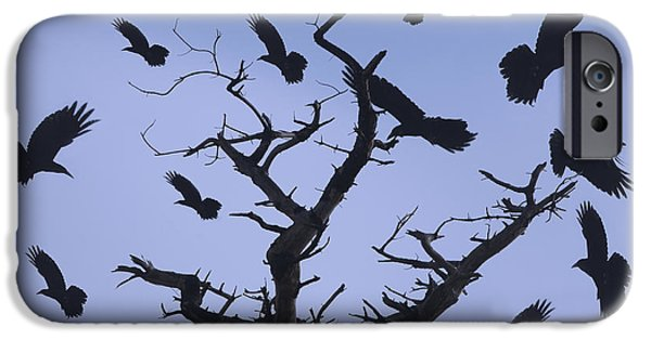 Cape Lookout iPhone Cases - A Murder Of Crows iPhone Case by Bob Christopher