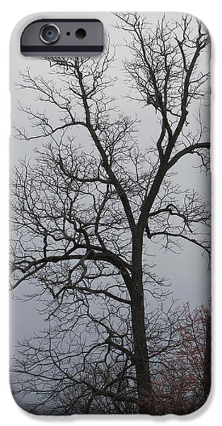 Mystic Setting Pyrography iPhone Cases - A mysterious tree on a foggy day iPhone Case by A J