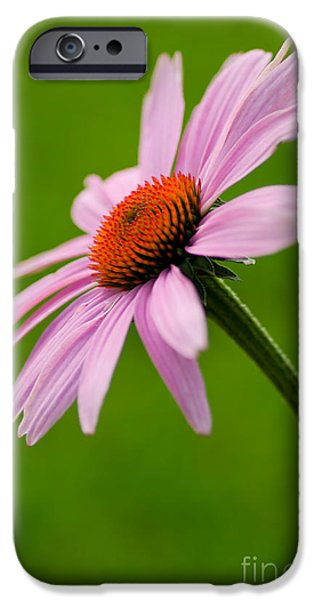 Bloosom iPhone Cases - A Natural Beauty iPhone Case by Nick  Boren