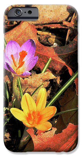 A New Season Blooms iPhone Case by Karol  Livote