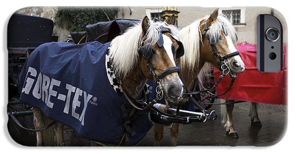 Horse And Buggy iPhone Cases - A Pair of Ponies in Salzburg iPhone Case by John Rizzuto
