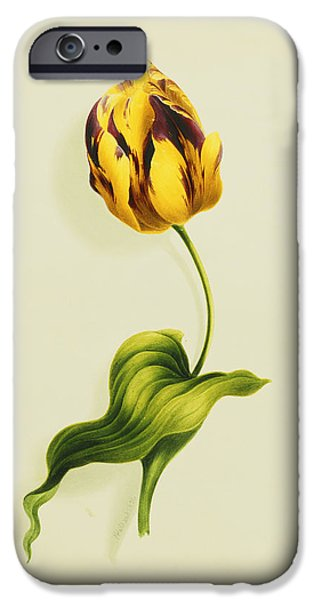 Biology Paintings iPhone Cases - A Parrot Tulip iPhone Case by James Holland